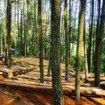 Tempat Wisata di Jogja yang sering digunkanan untuk Selfie dan Pre wedding: Hutan Pinus Imogiri Bantul
