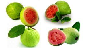 Manfaat Jambu Biji merah Untuk Menyembuhkan Penyakit Demam Berdarah Dan Menjaga Kesehatan Kulit
